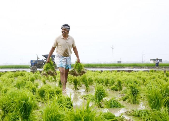 Actor Karthi practices organic farming for his upcoming film Kadaikutty Singam