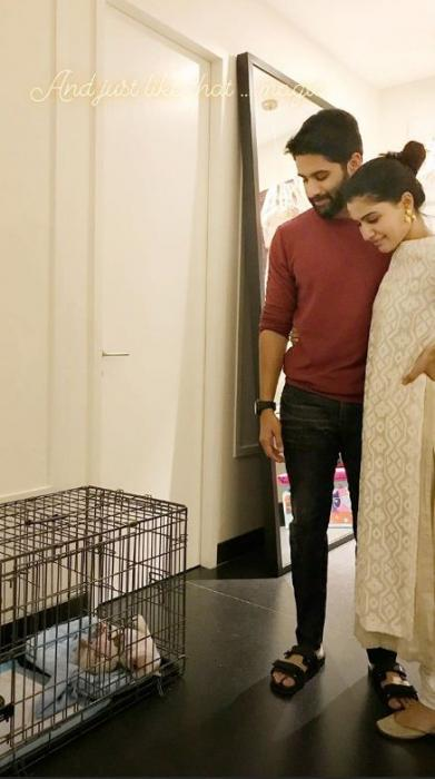 Samantha Akkineni and Naga Chaitanya welcome a new member to their family; view picture